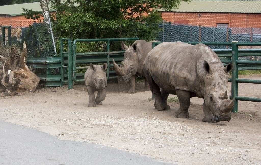 Knapp vier Monate ist Tayo jetzt alt. Foto: Serengeti-Park Hodenhagen