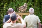 """Bei der Flugshow """"Jäger der Nacht"""" kommen Vogelfreunde und Fotografen ganz nah ran an die Tiere. Foto: Wildpark/Thomas Ix"""