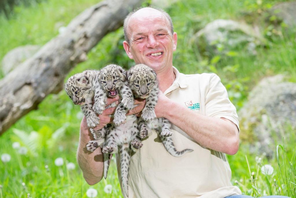 So sieht ein glücklicher Tierpfleger aus: Jens Pradel mit den drei Schneeleoparden-Kätzchen. Foto: Wildpark/Thomas Ix