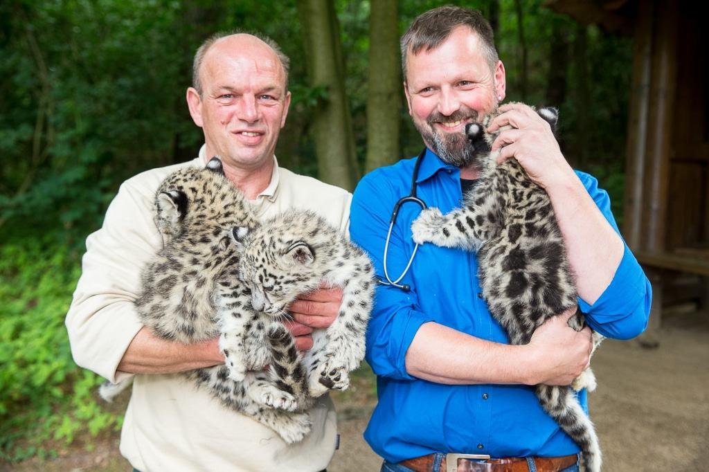 Auch für einen erfahrenen Tierarzt nicht alltäglich: Jörg Kaling (rechts) und Jens Pradel mit den prächtigen Schneeleoparden-Katzen. Foto: Wildpark/Thomas Ix