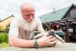 Kleines Kondor-Weibchen hält Wildpark-Falkner auf Trab