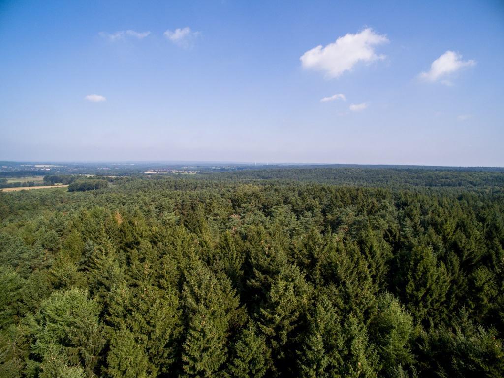 Die 40 Meter hohe  Aussichtsplattform des Baumwipfelpfades bietet eine einzigartige Fernsicht bis nach Hamburg. Text, Fotos und Illustrationen: Weitblick Projektrealisierung