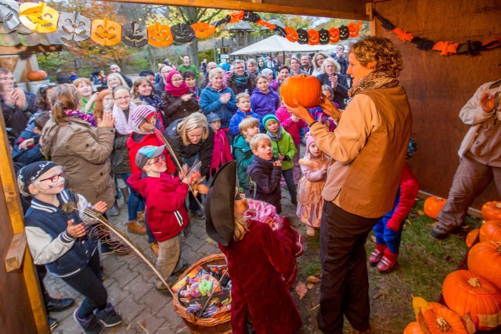 Wer hat den schönsten, gruseligsten oder originellsten Kürbis geschnitzt? Beim Halloween-Familienfest werden die besten Kürbisse prämiert. Foto: Wildpark/Thomas Ix
