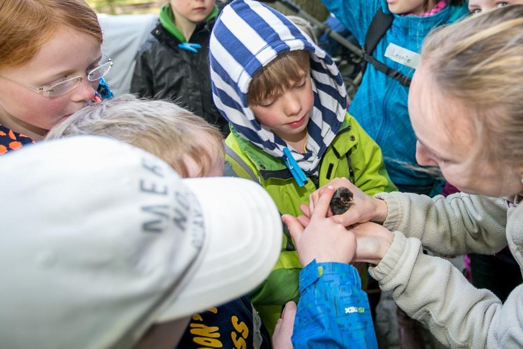 Die Junior-Tierpfleger begutachten in den Ferien die ersten Osterküken. Foto: Wildpark/Thomas Ix