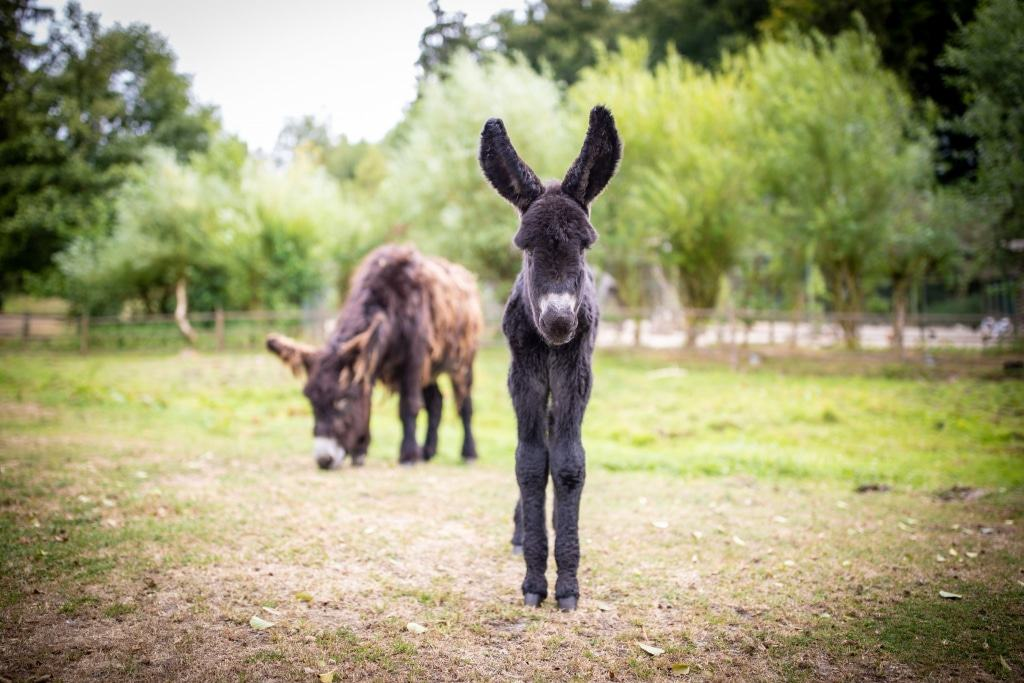 Noch ist das kleine Esel-Fohlen ein Strich in der Landschaft - mit seinen langen Ohren ist er aber dennoch nicht zu übersehen. Foto: Adrian Fohl