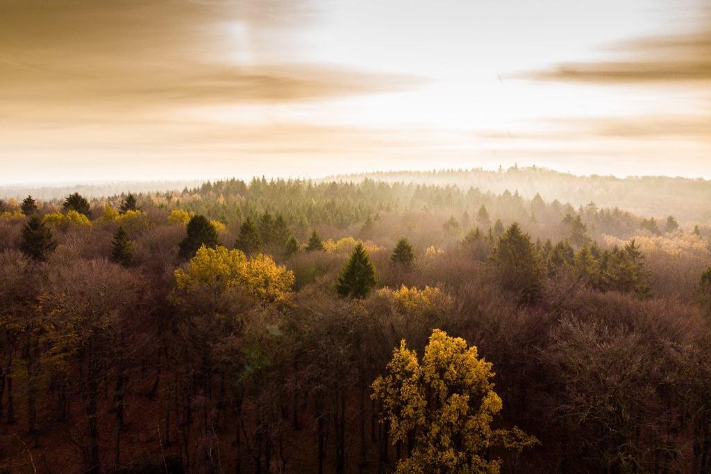 Naturerlebnis vom Feinsten: Auf solch eine Aussicht auf den Ahrwald können sich die Besucher des Baumwipfelpfades freuen. Foto: Adrian Fohl
