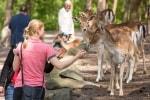 Tiere und Besucher genießen die ersten wärmenden Frühlingssonnenstrahlen im Wildpark. Foto: Wildpark/Thomas Ix