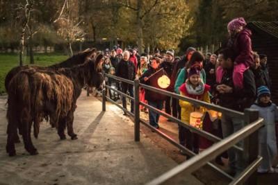Mit selbst mitgebrachten Laternen geht es bei Einbruck der Dämmerung auf eine Gruselwanderung durch den Wildpark zu den Tieren. Foto: Thomas Ix