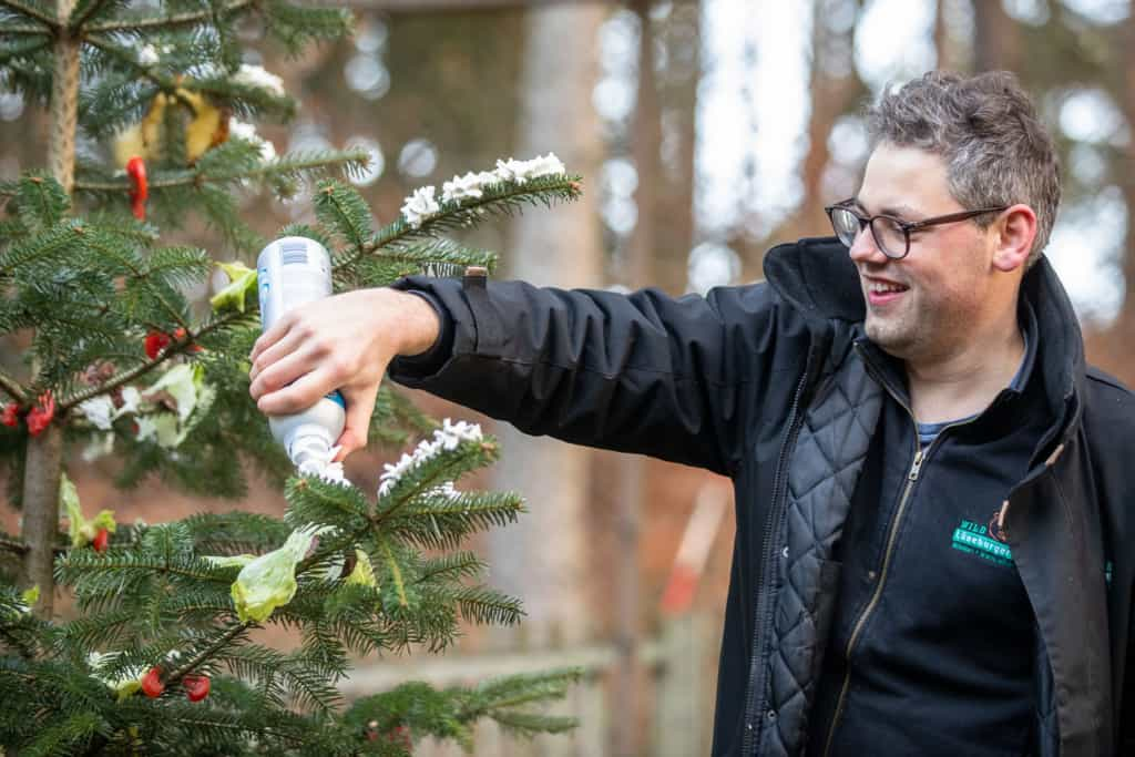 Wildpark-Mitarbeiter Adrian Fohl verziert den Tannenbaum in Ermangelung an echtem Schnee mit Schlagsahne. Text & Fotos: Wildpark / Thomas Ix