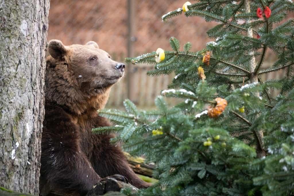 Baum zu interessieren. Text & Fotos: Wildpark / Thomas Ix