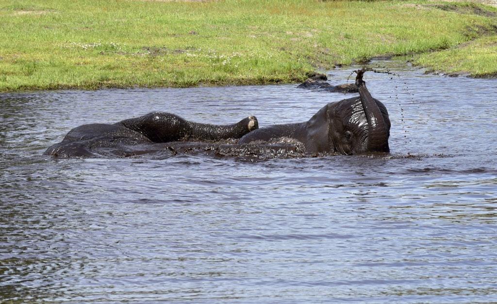 Von den Elefantenkindern sieht man nur noch den Rüssel oder einen Fuß. Foto: Serengeti-Park Hodenhagen