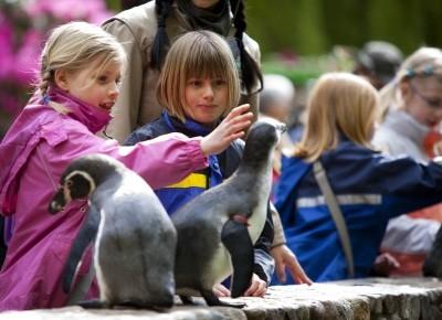 Kindern füttern die Humboldtpinguine im Weltvogelpark Walsrode Photo: Weltvogelpark Walsrode/JOAO MARCOS ROSA / NITRO