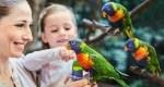 Loris in der australischen Erlebnislandschaft Toowoomba Foto: Weltvogelpark Walsrode
