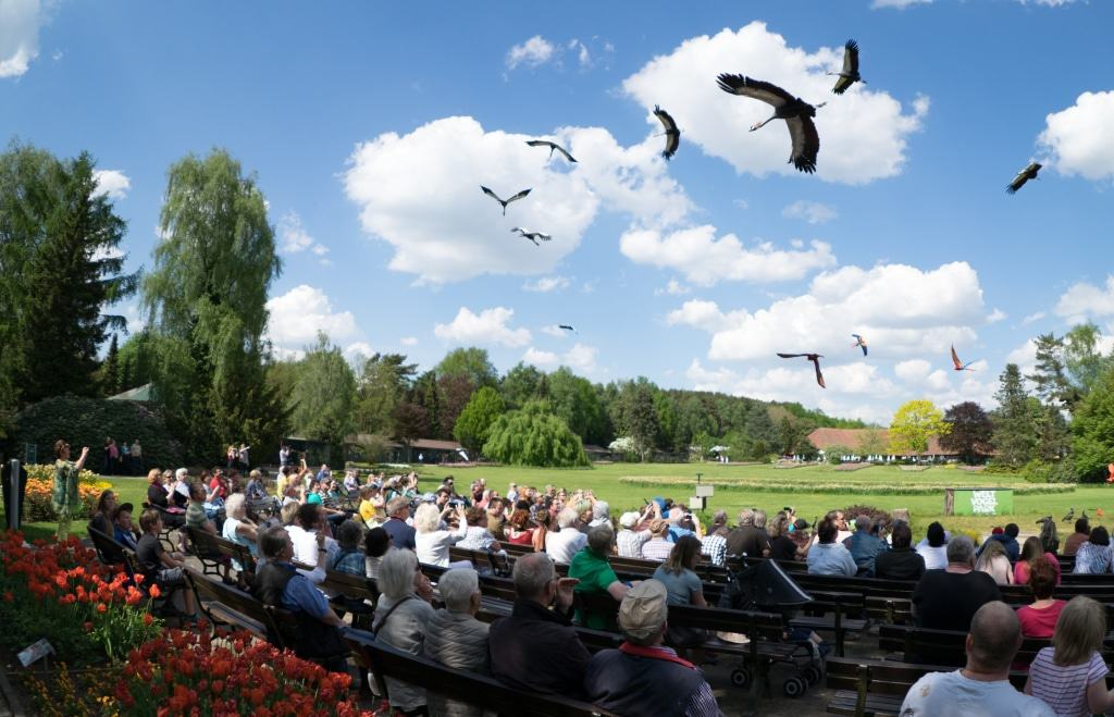 Finale der Flugshow Foto: Weltvogelpark Walsrode