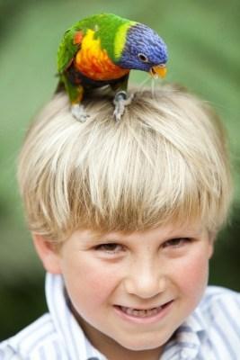 Kind mit buntem Papagei auf dem Kopf. Foto: Weltvogelpark Walsrode