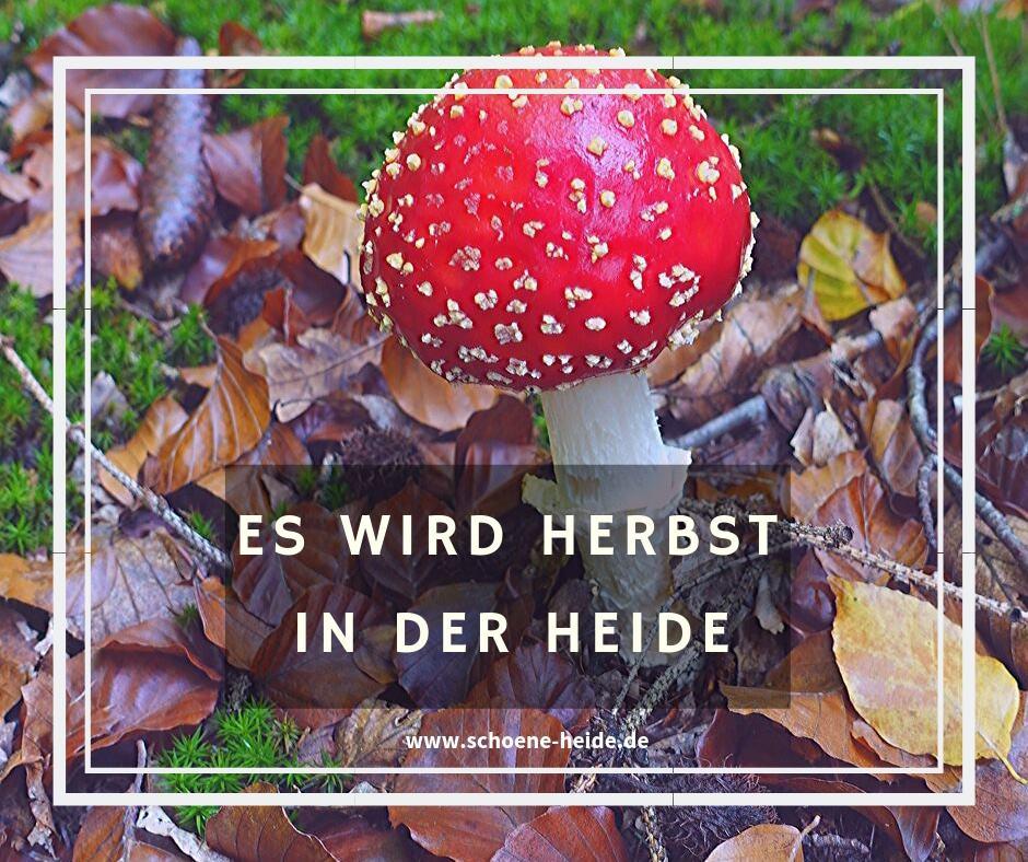 Grafik mit Fliegenpilz: Es wird Herbst in der Heide