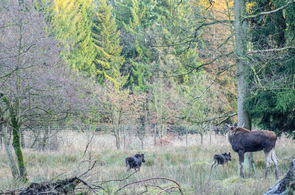 Elchgehege Foto: Wildpark Müden