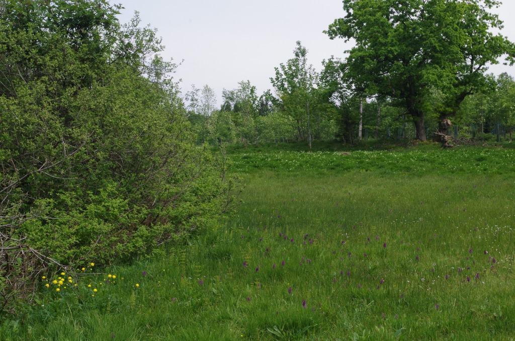 Durch neue Wege bei der Grünlandpflege werden die Wiesenlebensgemeinschaften ökologisch aufgewertet. Foto: Niedersächsische Landesforsten