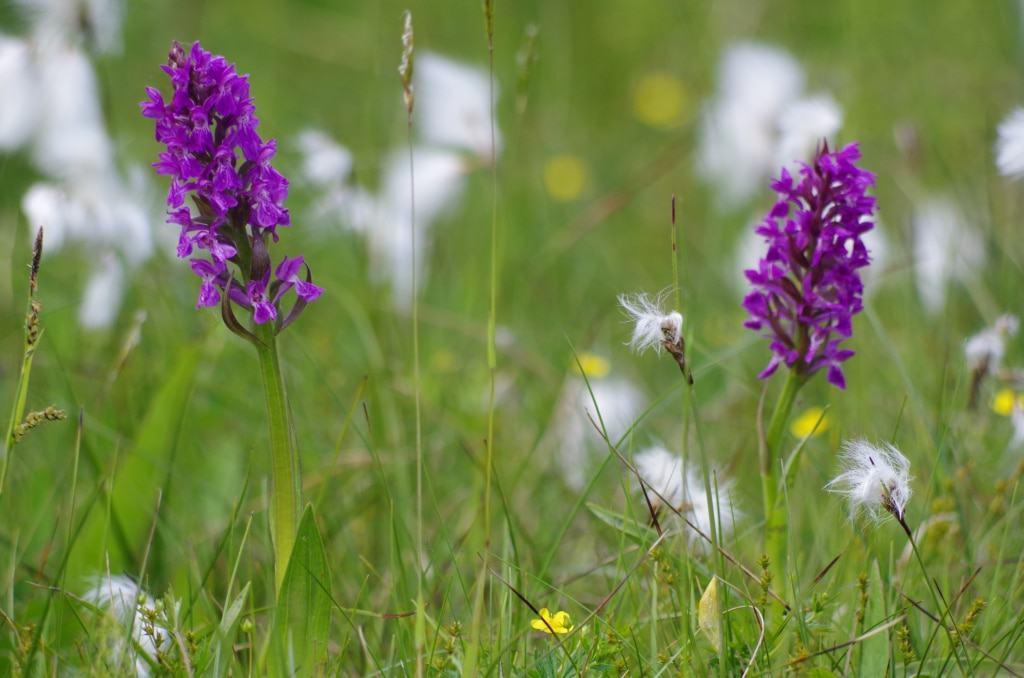 Artenreiches Grünland mit verschiedenen Blühpflanzen Foto: Niedersächsische Landesforsten