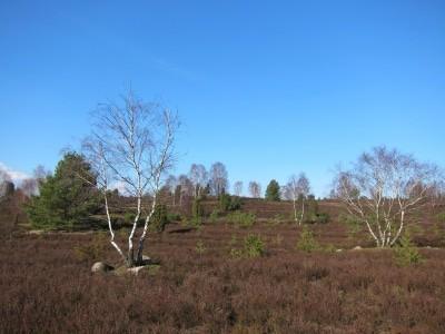 Heidelandschaft im Winter