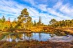 NORDPFAD Börde Sittensen - Herbst im Tister Bauernmoor © Björn Wengler für TouROW