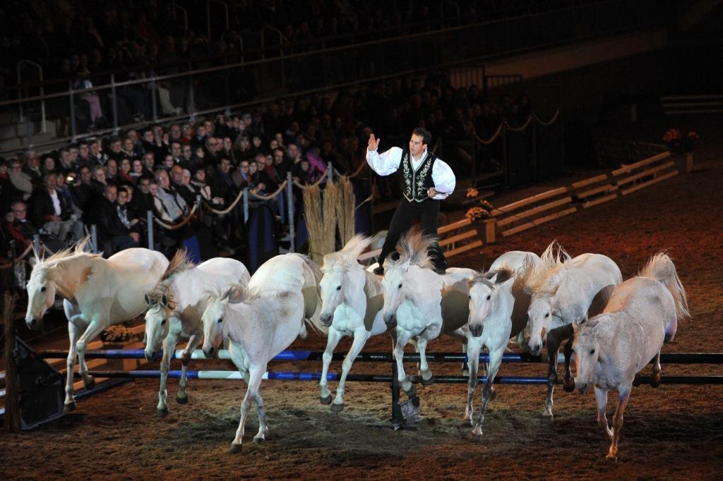 Lorenzo ist der Star auf dem Rücken der Pferde. Foto: Fachausstellungen Heckmann