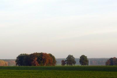 Herbsttag am Nordpfad Riepholm-Gilkenheide, Foto: Petra Reinken