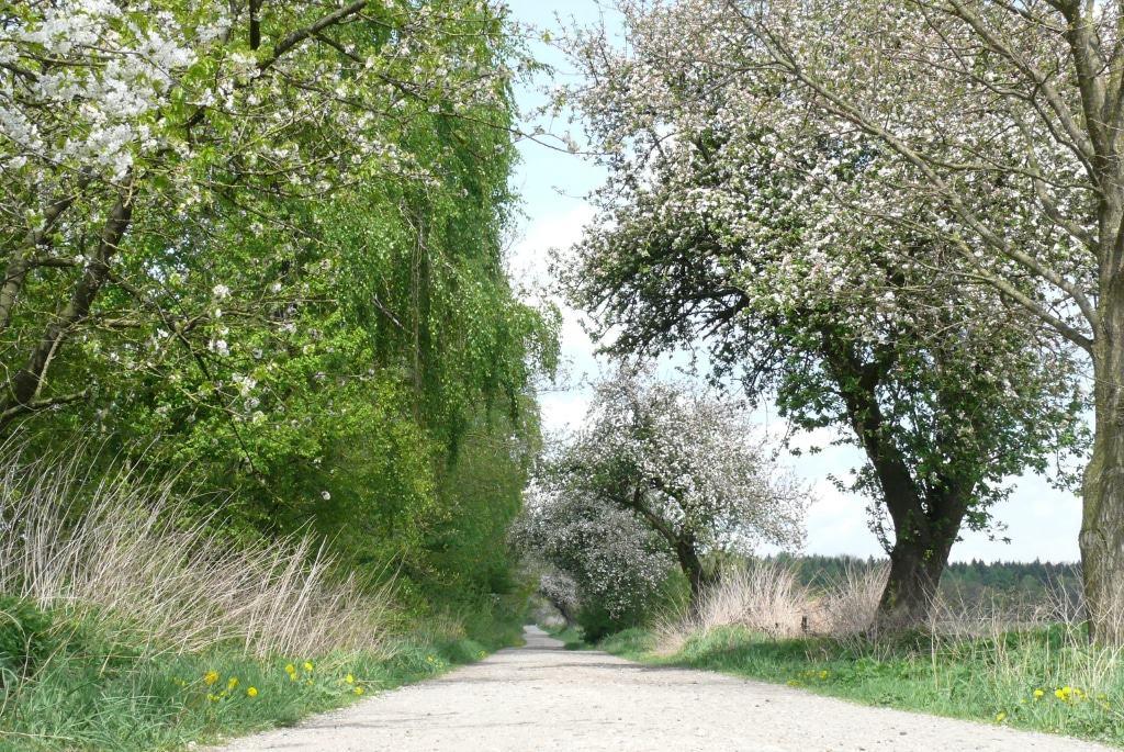 Wer im Frühling auf dem Schöpfungsweg unterwegs ist, erlebt die Obstbäume kurz vor Melzingen in voller Blüte. Foto: Petra Reinken/Wortwolf