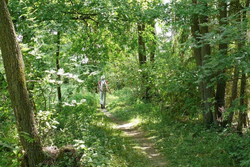 Kleine Wanderpfade prägen den Auferstehungsweg – und heben ihn dadurch von den anderen beiden Besinnungswegen ab. Foto: Petra Reinken/Wortwolf