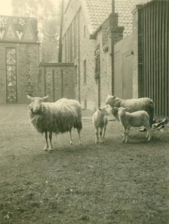 Schafe auf dem Hofplatz, um 1948 © Kunststätte Bossard