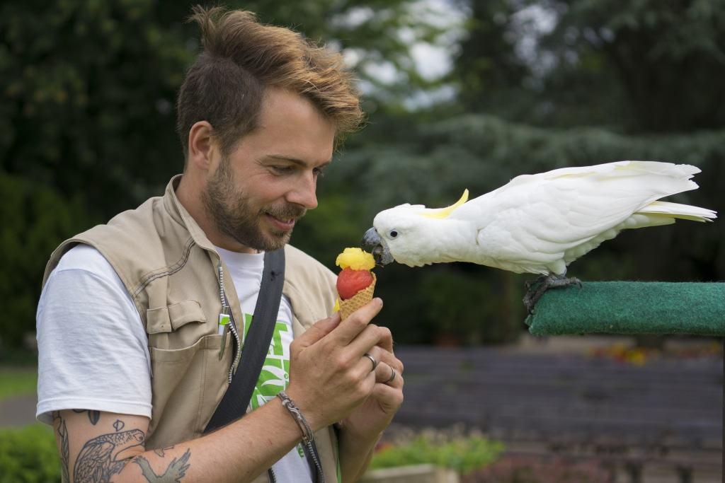 Tiertrainer und -pfleger Lech Bretschek vom Weltvogelpark mit einem kühlen Eis für den Gelbhaubenkakadu Foto: Weltvogelpark Walsrode