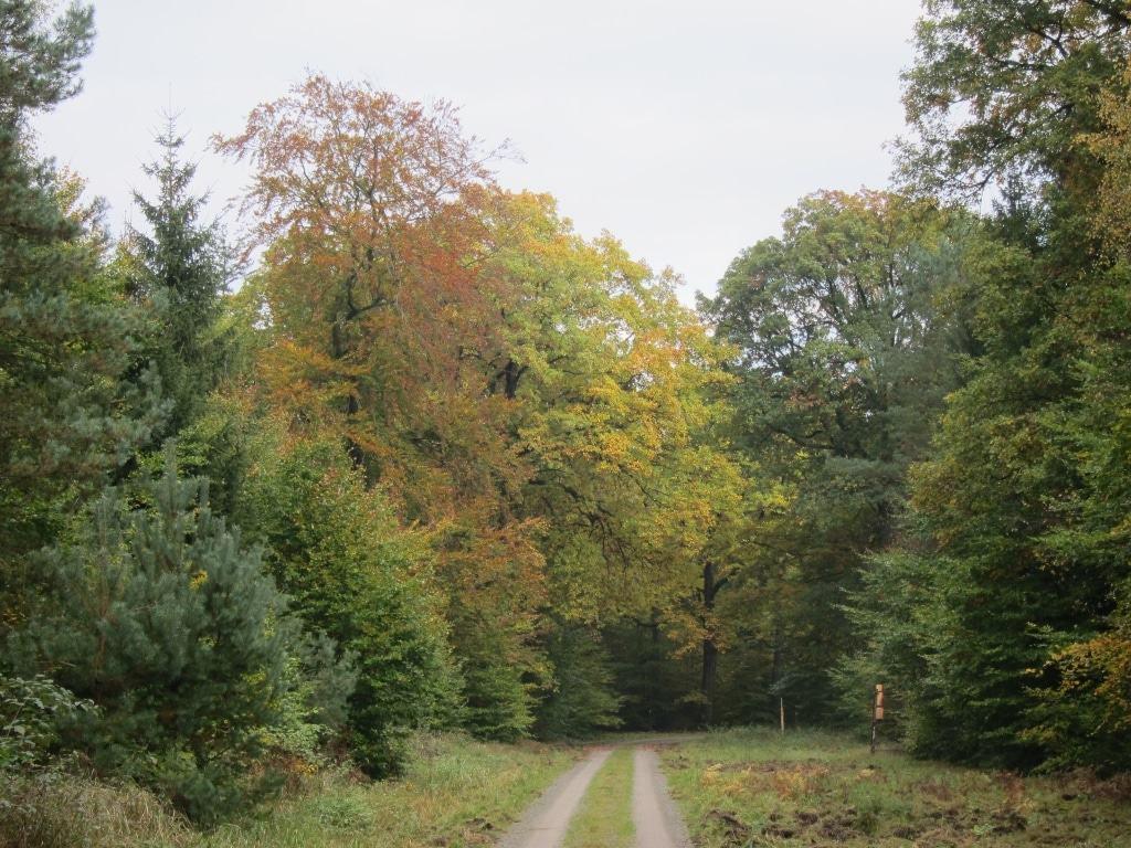 Abwechslungsreiche Waldlandschaft am Hauptweg entlang der Gasleitung im Lüßwald, Kreis Celle