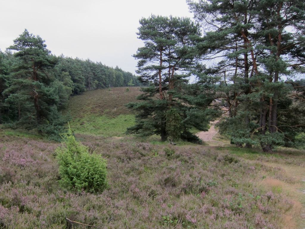Am Tiefental in der Misselhorner Heide