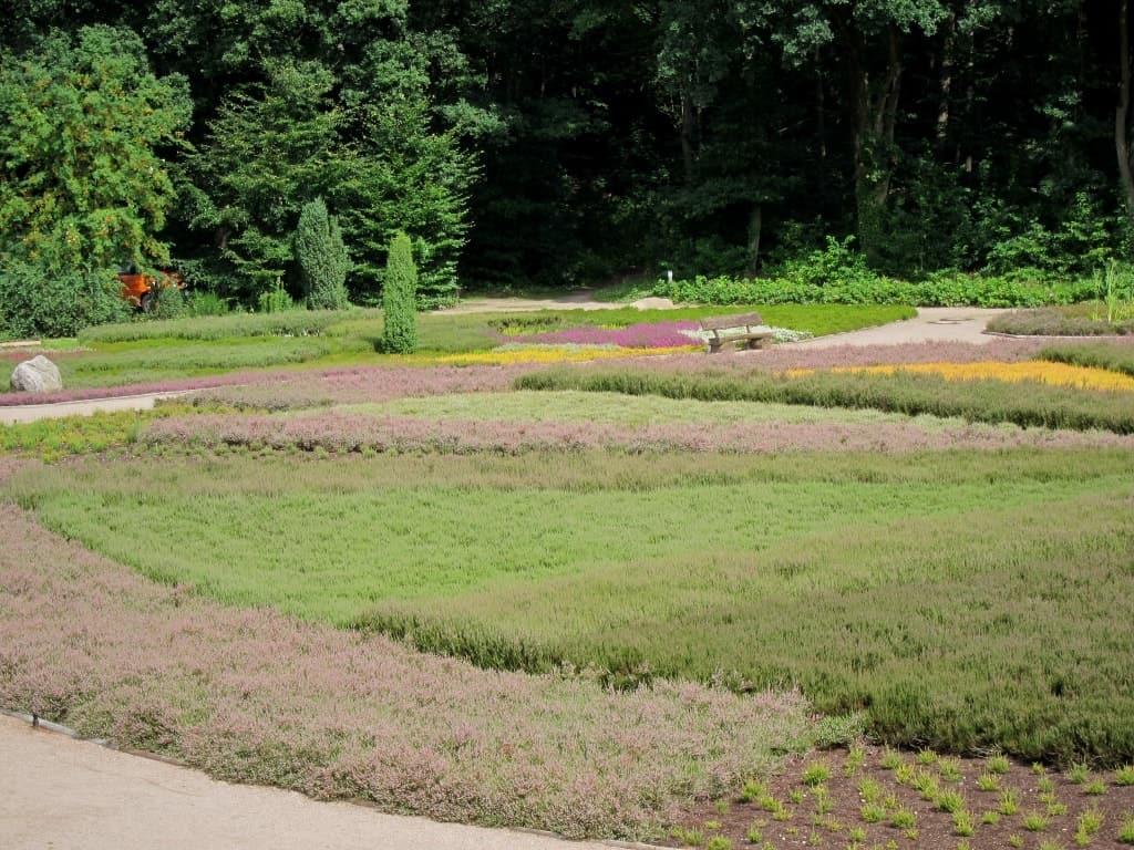 Ausschnitt des Rondells aus Heidekraut im Heidegarten Schneverdingen