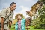 Flugshow im Weltvogelpark Walsrode Foto: Weltvogelpark Walsrode