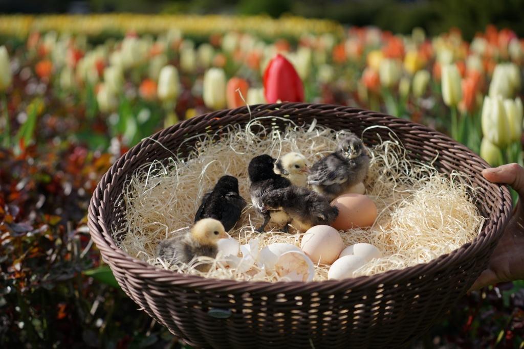 Körbchen mit Küken. Foto: Weltvogelpark Walsrode