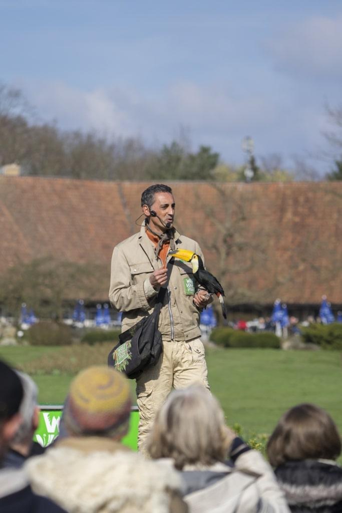 Neu in der Weltvogelpark Flugshow: Tukane. Foto: Weltvogelpark Walsrode