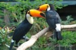 Weltweit erstmalig: Besucher können in der neuen Indoorattraktion Pukara Tukane von Hand füttern. Foto: Weltvogelpark Walsrode
