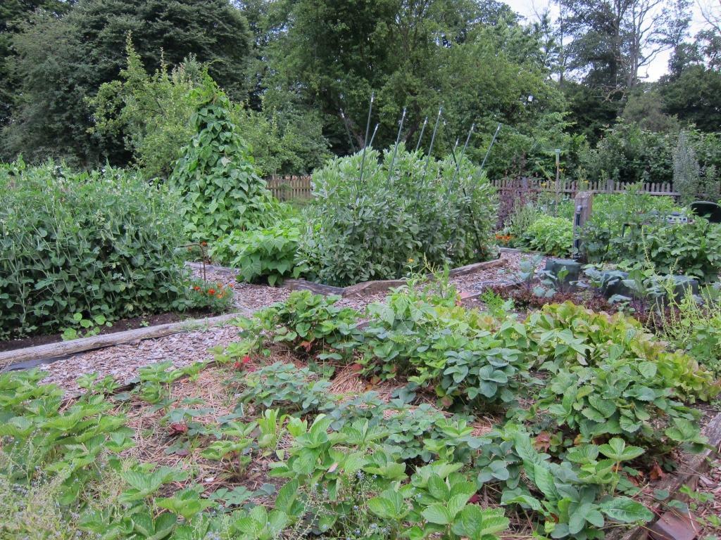 Bauerngärten dienten früher hauptsächlich der Versorgung mit Gemüse. Hier werden auch alte Sorten und Gemüse angebaut, die man heute seltener findet, wie zum Beispiel Dicke Bohnen.