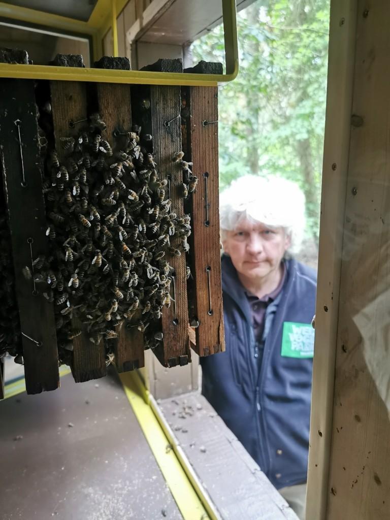 Ein Imker und sein Volk – Tierpfleger Harald Zinke mit seinen Bienen Foto: Weltvogelpark Walsrode