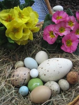 Bunte Eier mi Primeln. Foto: Weltvogelpark Walsrode