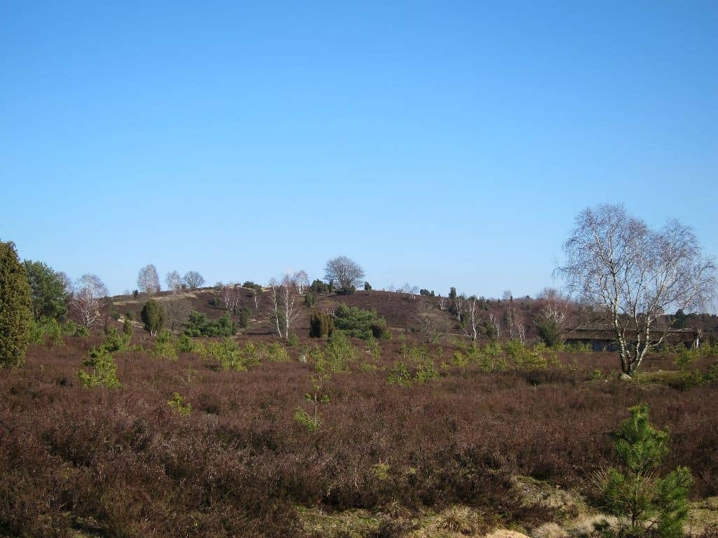 Sonniger Februartag in der Lüneburger Heide: Blick auf den Wilseder Berg in der Bildmitte