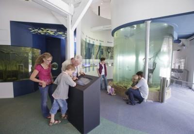 Blick in die Aquarienlandschaft im Biosphaerium Foto: Andreas Tamme