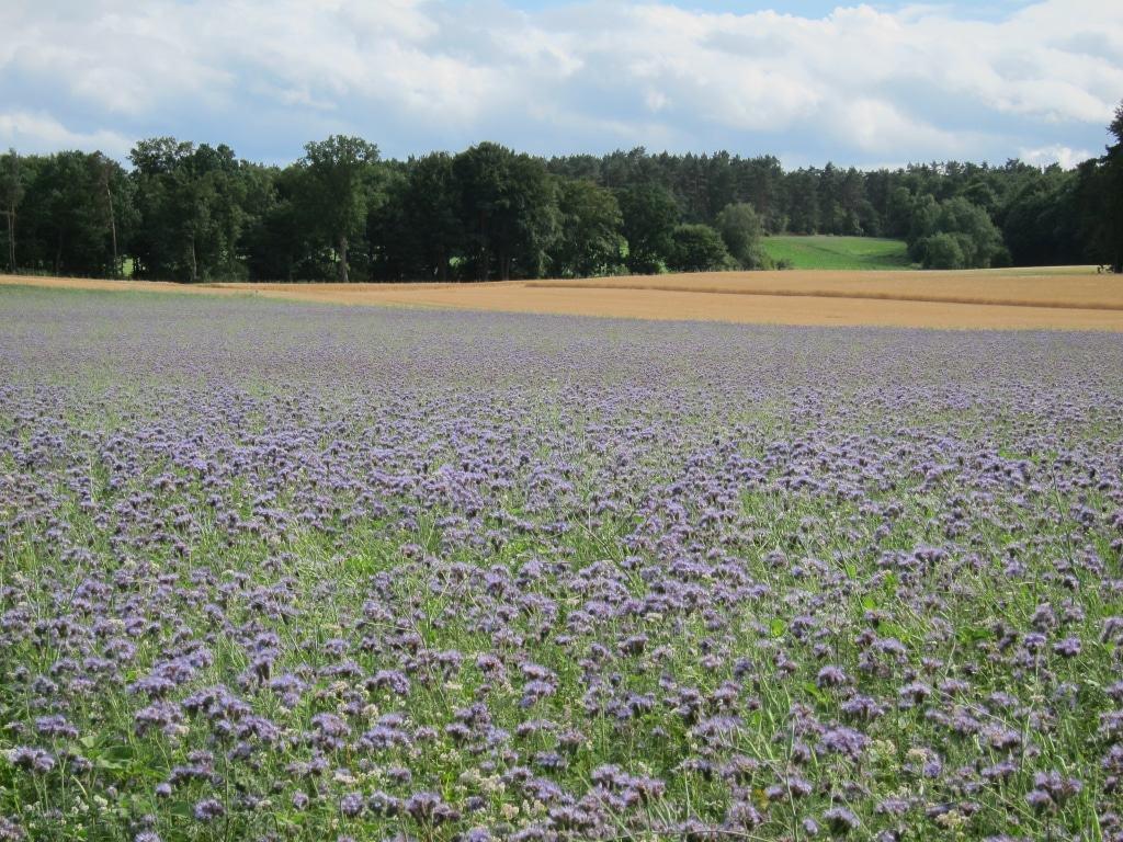Lüneburger Heide Wochenendtipps 2906 01072018 Schöne Heide