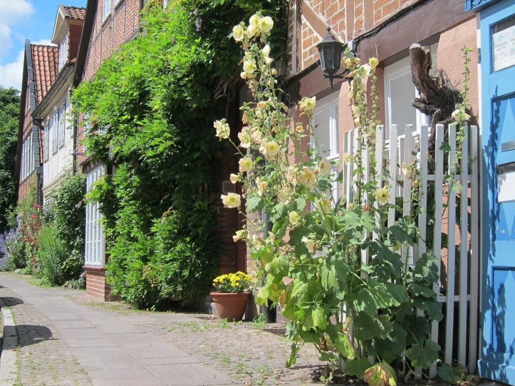 Westliche Altstadt in Lüneburg - Auf dem Meere - Blütenpracht im Juli