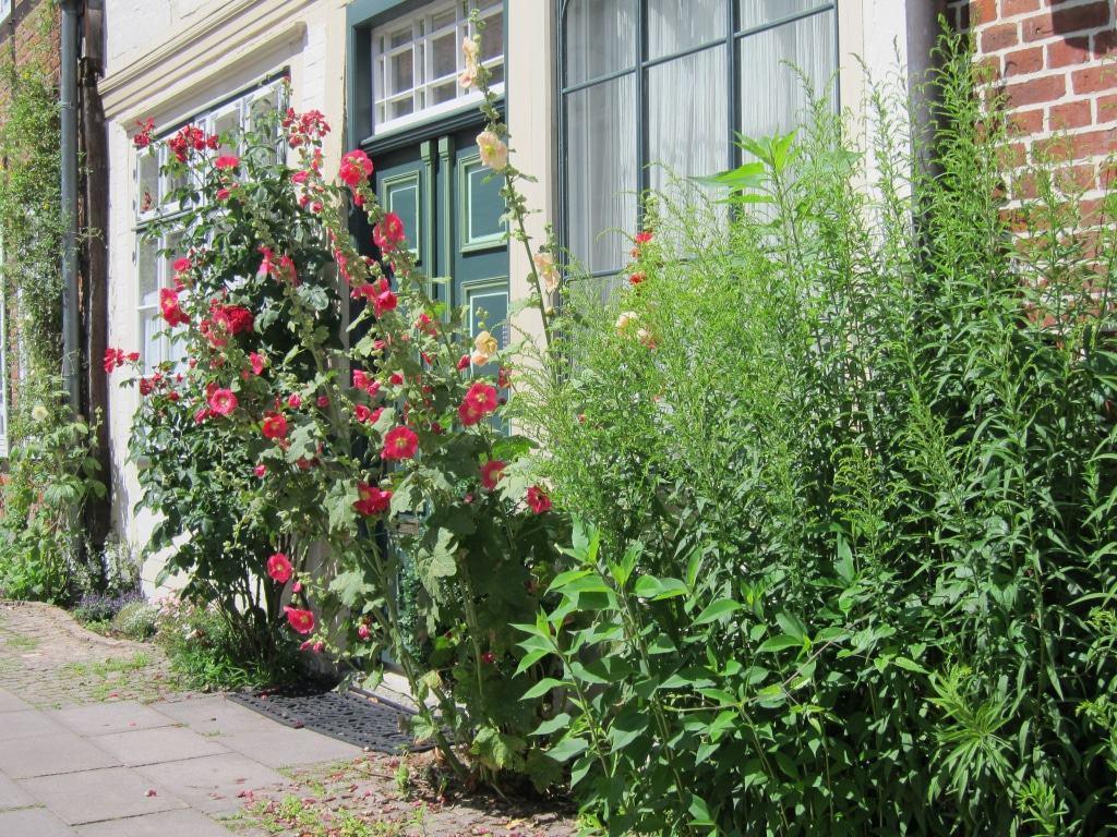 Auf dem Meere in Lüneburg - Hausfassade mit Stockrosen und Rosen
