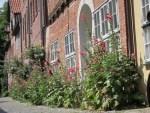 """Rosen und Stockrosen blühen in der Straße """"Auf dem Meere"""" in Lüneburg"""
