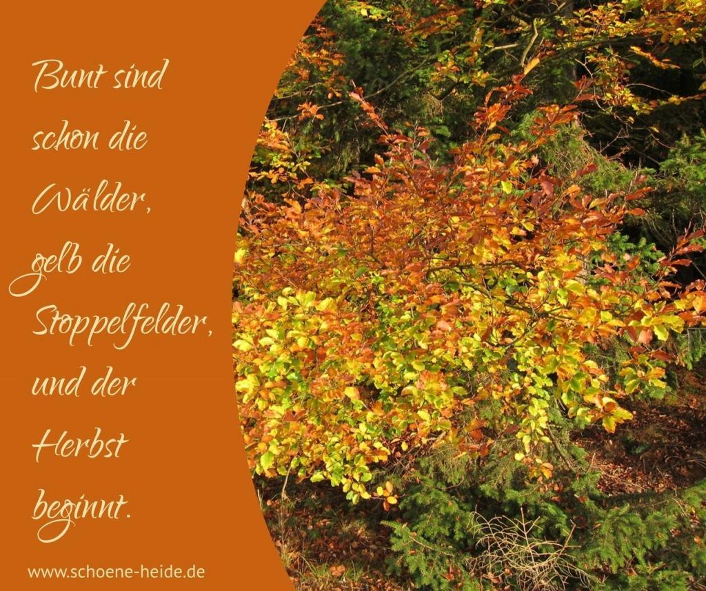 Bunt sind schon die Wälder, gelb die Stoppelfelder und der Herbst beginnt. www.schoene-heide.de