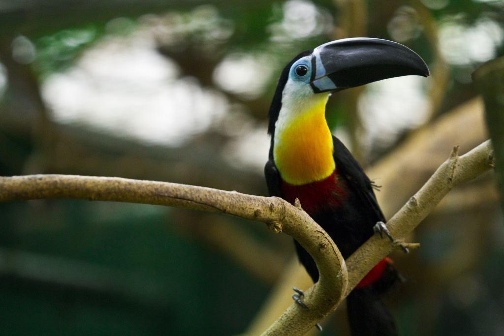 Dottertukan Foto: Weltvogelpark Walsrode