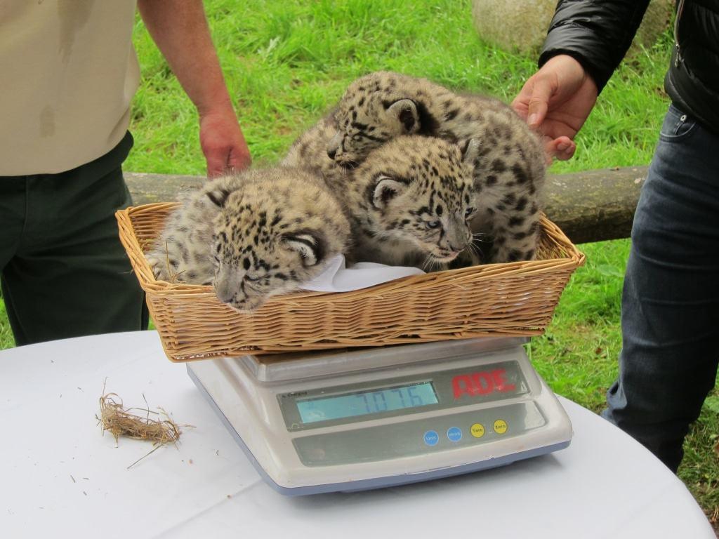 Zusammen und mit Korb wiegen die Kleinen etwa sieben Kilo.